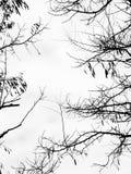 Niederlassungen ohne Blätter Stockfotos