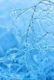 Niederlassungen umfasst mit Eis im Winter Lizenzfreie Stockfotos