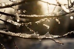Niederlassungen umfasst mit Schnee gegen die Sonne Lizenzfreie Stockbilder