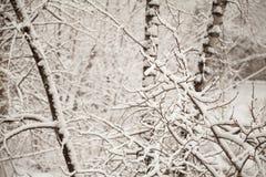 Niederlassungen umfasst mit Schnee im Park Schneiender Hintergrund des weißen ruhigen Winters Stockbilder