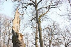 Niederlassungen und Bäume Lizenzfreies Stockfoto
