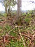 Niederlassungen und Bäume nr Crookham Northumerland, England Großbritannien Stockfotos