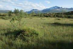 Niederlassungen und Berge Stockfotografie