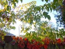 Niederlassungen und Blätter Stockfotos