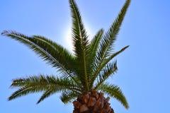 Niederlassungen und Blätter der hohen Palme im Sonnenlicht lizenzfreies stockfoto