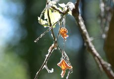 Niederlassungen und Blätter in der Natur während des Sommers stockfotografie
