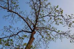 Niederlassungen und Blätter mit blauem Himmel Lizenzfreie Stockfotos