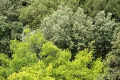 Niederlassungen und Blätter der unterschiedlichen Art der Bäume Stockfoto
