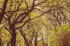 Niederlassungen und Laub von Bäumen gegen den Himmel Stockbilder