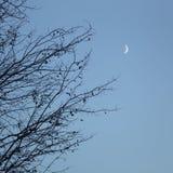Niederlassungen und Mond Stockbilder
