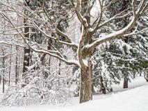 Niederlassungen und Schnee Lizenzfreies Stockbild