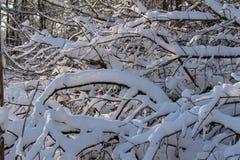 Niederlassungen unter dem Schnee Lizenzfreie Stockfotografie