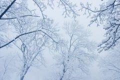 Niederlassungen unter Schnee im Nebel Stockfoto