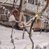 Niederlassungen voll vom Schnee stockfotos