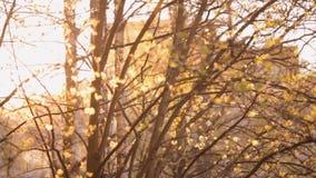 Niederlassungen von Bäumen in der untergehenden Sonne stock footage