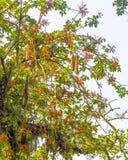 Niederlassungen von Bäumen färben sich, Grün, Blätter und Blumen gelb stockfotos