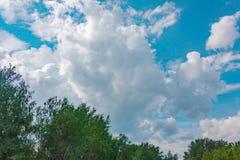 Niederlassungen von Bäumen gegen den Himmel Stockfotografie