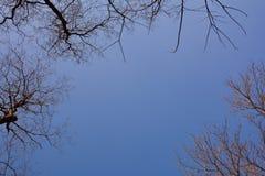 Niederlassungen von Bäumen im blauen Himmel Lizenzfreies Stockbild