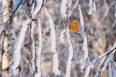 Niederlassungen von Bäumen mit einem einsamen Blatt und einem weißen Schnee Lizenzfreie Stockbilder