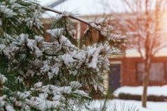 Niederlassungen von Büschen im Schnee im Winter im bewölkten Schnee verwittern Weiße Schneeflocken auf einem blauen Hintergrund Stockfotografie