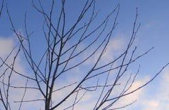 Niederlassungen von den Bäumen und von Büschen bedeckt mit Frost Stockfoto