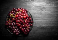Niederlassungen von roten Trauben auf der Platte Stockfotos