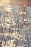 Niederlassungen von trockenen Anlagen mit Schnee Lit mit Sonnenlicht Stockbilder