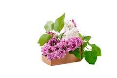 Niederlassungen werden lila in einem Pappkorb gefärbt Lizenzfreie Stockfotografie
