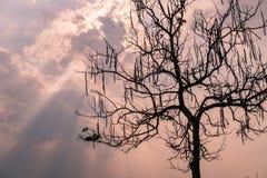 Niederlassungs-Baumschattenbilder gegen Sonnenunterganghintergrund Lizenzfreie Stockfotos