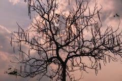 Niederlassungs-Baumschattenbilder gegen Sonnenunterganghintergrund Lizenzfreies Stockbild