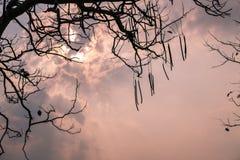Niederlassungs-Baumschattenbilder gegen Sonnenunterganghintergrund Stockfotos