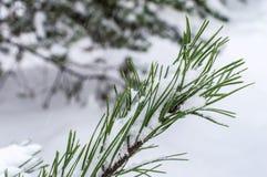 Niederlassungs-Weihnachtsbaum im Schnee im eisigen Freilicht Lizenzfreie Stockfotos