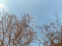 Niederlassungsbaum auf Himmel Stockfoto