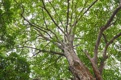Niederlassungsbaum und -sonnenschein Stockbild