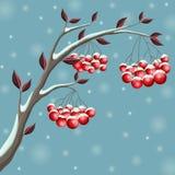 Niederlassungsillustration des verschneiten Winters mit roter Beere und Blatt, in den Schneefällen für Weihnachten Lizenzfreies Stockbild