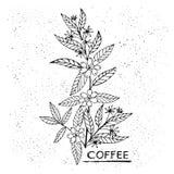 Niederlassungskaffee in der von Hand gezeichneten Illustration der grafischen Art Stockfoto