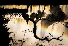 Niederlassungsschattenbild bei den Iguaçu-Wasserfälle, Argentinien stockfoto