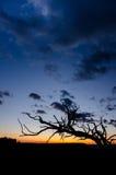 Niederlassungsschattenbild bei Sonnenuntergang stockbild