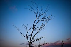 Niederlassungsschattenbilder des trockenen Baums gegen den Sonnenunterganghimmel lizenzfreies stockfoto