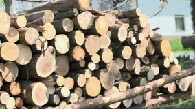 Niederlegung langen Klotz für Bauholz an auf Lager stock video footage