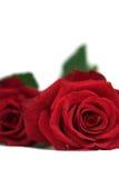 Niederlegung mit zwei Rosen Stockfotos