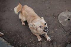 niedobry pies Zdjęcie Stock
