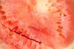Niedojrzały czerwonawy arbuz zdjęcia royalty free
