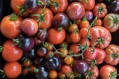 Niedokonany wyprodukowany lokalnie heirloom i hybrydowi pomidory Obraz Stock