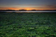 Niedrige Gezeiten in der Seeküste stockfoto