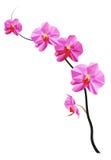 Niedrige Polymagnolienblume Stockbild
