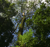 Niedrige Winkelsicht der Bäume stockfotos