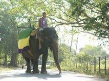 Niedrige Winkelsicht des Mann-Reitens auf Elefanten Stockbild