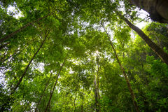 Niedrige Winkelsicht des Waldes Stockfotos