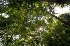 Niedrige Winkelsicht des Waldes Lizenzfreies Stockfoto